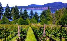 Sea Star Estate: Gulf Islands' Stellar New Winery