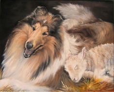 Collie with lamb