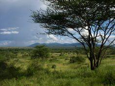 African Savanna Landscape | An East African savanna landscape