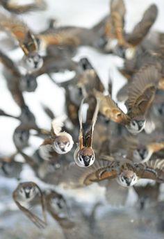 格好いい雀初めて見た。 Pretty Birds, Beautiful Birds, Animals Beautiful, Any Birds, Little Birds, Animals And Pets, Funny Animals, Cute Animals, Piper Bird