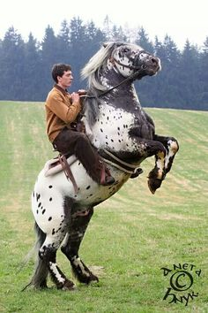 Up! Cute Horses, Beautiful Horses, Garden Sculpture, Lion Sculpture, Appaloosa Horses, Draft Horses, Horse Breeds, Statue, Horse Stuff