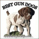 Pet Training - 5 Minute Training Drills - Gun Dog Breeders Directory This article help us to teach our dogs to bite just exactly the things that he needs to bite Pointer Puppies, Pointer Dog, Gsp Puppies, Funny Puppies, Gun Dog Training, Labrador Chocolate, Aggressive Dog, German Shorthaired Pointer, Hunting Dogs