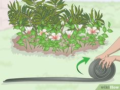 How to Install Plastic Lawn Edging. Plastic lawn edging is used to distinguish a garden bed from the rest of a lawn, making your garden look neat and tidy! To place the lawn edging, dig a trench around the garden bed and cut away any. Small Balcony Garden, Garden Beds, Lawn And Garden, Plastic Lawn Edging, Types Of Plastics, Hosta Gardens, Garden Shower, Picture Source, Picture Sharing