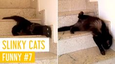 FUNNY CAT VIDEOS PART #7 - SLINKY CATS | Meow Paw