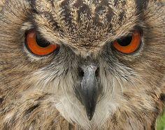 http://forum.maplewoodonline.com/uploads/2009/09/owl.jpg