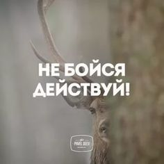 павел деев никогда не сдавайся: 9 тыс изображений найдено в Яндекс.Картинках