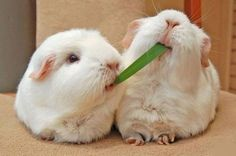 Sharing a leaf, photo from visboo.com - Pixdaus