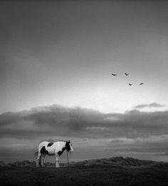북구의 방랑자가 채취한 찬란한 은빛 세계 | 펜티 사말라티 사진전