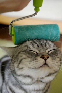 Silly Kitty, rollers are for paint! :P #adorable #cat