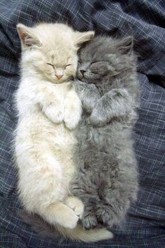Awww! They are so purrfect together