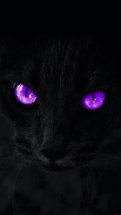 the purple! Purple Love, Purple Cat, Purple Stuff, All Things Purple, Shades Of Purple, Purple And Black, Magenta, Black White, Purple Reign