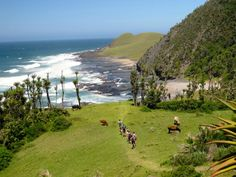 Wild Coast Hiking Trail POrt St Johns to Coffee Bay - Google Search Hiking Trails, South Africa, Golf Courses, Coast, Southern, Coffee, Country, Google Search, Water