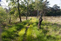 Naturschutzgebiet Schnaakenmoor in Hamburg-Rissen