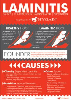 This quick reference fact sheet provides you with a list of potential causes that trigger this horrible disease, clinical signs for early detection of laminitis, management and prevention strategies to effectively help your horse is times of need.