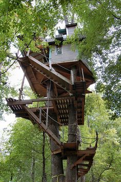 Tree House / The Green Life U0026lt;3 Tree Tops, Treehouse Ideas, Green