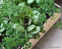 How to Grow Spinach in a Pot Want beautiful, fresh spinach? Learn how to grow spinach in a pot the e Growing Tomatoes In Containers, Grow Tomatoes, Growing Spinach, Flowering Bushes, Tomato Farming, Tall Flowers, Garden Drawing, Garden Show, Organic Fertilizer