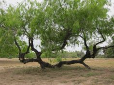 Image result for tree reference