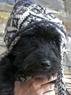 scottie in a hat!