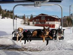 the avalanche dogs