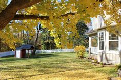 View of the front lawn through the fall colors of a giant Ginko tree. An old working hand pump and pumphouse can be seen on the left with the manor house on the right (Wedding & Event Venue / Bed & Breakfast - VA Blue Ridge Mountains)