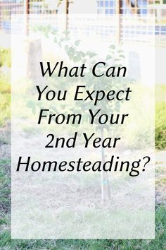 Second Year on the Farm Recap. The top 10 moments (good and bad) of our second year homesteading.   desolatehomestead.com