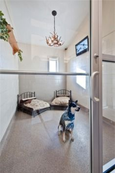 Kennel done with painted cinder blocks, looks very nice, like the window, the