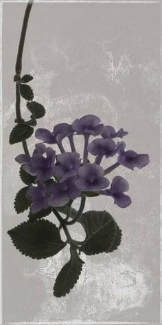 """Flowers in Neutral Moment-2014 """"Luntana montevidensis"""" Archival pigment print Photo by Soichi Oshika"""
