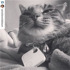 Squirrel? I guess I could see that.  #Repost @ainsliewiddison. Your cat can now find your phone too!  When ur cat is actually part squirrel  #kitty #happyasfuck #funny #cat #catselfie #blackandwhite #love #furchild #tb #tileapp @tileapp #tiledit  www.thetileapp.com