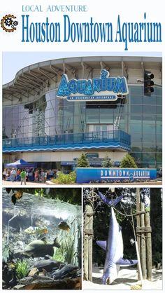 Local Adventure   Houston Downtown Aquarium - will it make a good day trip?