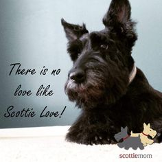 There is no love like Scottie love!