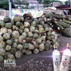 Thank gad for grac 237 as a dios mezcal tequila aficionado
