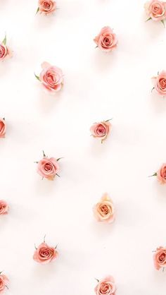 iPhone wallpaper roses