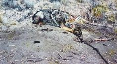 Petition online: Pass act to prevent trapping in wildlife refuges - this is a trapped dog - PETA