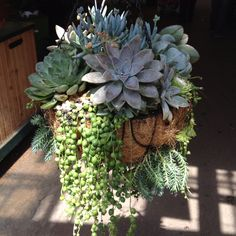 Maybe even my brown thumb could keep this alive? Succulents Online, Succulents In Containers, Cacti And Succulents, Planting Succulents, Planting Flowers, Container Flowers, Container Plants, Succulent Gardening, Container Gardening Vegetables