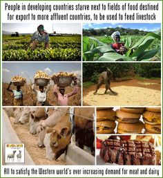People starve because of agriculture land around the world is used to grow feed for livestock. People Around The World, Around The Worlds, Belgian Malinois Dog, How To Become Vegan, Help The Environment, Western World, Save The Planet, Animal Rights, Global Warming