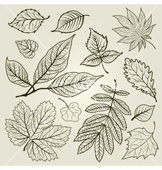 Autumn leaf design vector on VectorStock®