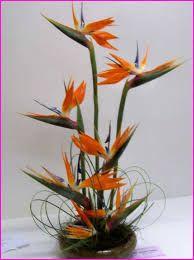 Floral art Artistic expression: Strelitzia prize show 2012 Tropical Flower Arrangements, Modern Floral Arrangements, Church Flower Arrangements, Ikebana Arrangements, Church Flowers, Exotic Flowers, Tropical Flowers, Silk Flowers, Beautiful Flowers