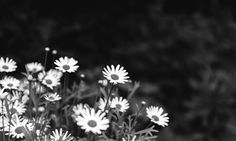 Flowers by olejx on 500px