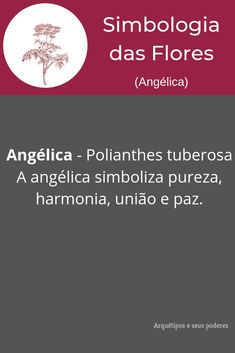 Angélica Flor Angelica, All About Plants, Wicca, Feng Shui, Witchcraft, Celtic, Meant To Be, Magic, Memes