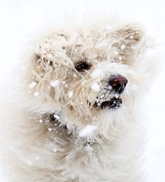 Snow pup by Sarah Bourque on 500px