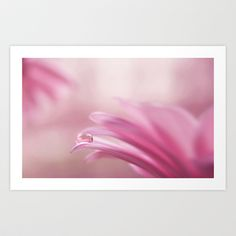 pinkish Art Print by ingz - $18.00     #photography #print #homedecor #pink #daisy #daisies #flower #abstract #ingz #society6