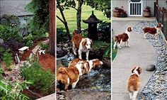 How to landscape a dog-friendly garden.  Includes a link to a comprehensive list of plants toxic to doggies.