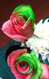 DIY:  Bi-Colour Rose
