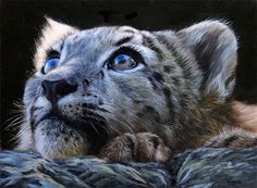 Snow Leopard – Oil Painting Commission   How to Paint Animals ...