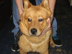Atlanta GA: 7/22 update RE: HW+ test result for Sampson the Chow mix
