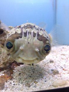 un petit sourire de poisson