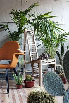 """Plantas apra la decoración .- Cactus .- plantas exóticas.  ED/ Oct - Dec 2010 """" Cactus Love""""  Photography: Emre Dorter Styling: Gozde Ek"""