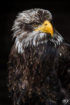 Scharfblick by Michael J. Kochniss            www.mjk-photo.de            Michael J. Kochniss: Photos                                 #animals #photography
