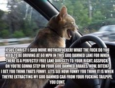 Road Rage - LOLcats is the best place to find and submit funny cat memes and other silly cat materials to share with the world. We find the funny cats that make you LOL so that you don't have to. Funny Animal Pictures, Funny Animals, Adorable Animals, Animal Pics, Funny Photos, Funny Cute, The Funny, Hilarious, Assurance Auto