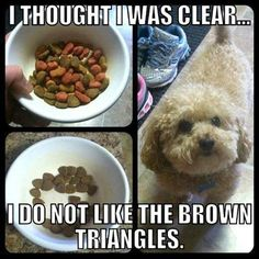 If you have a dog you know the struggle lol